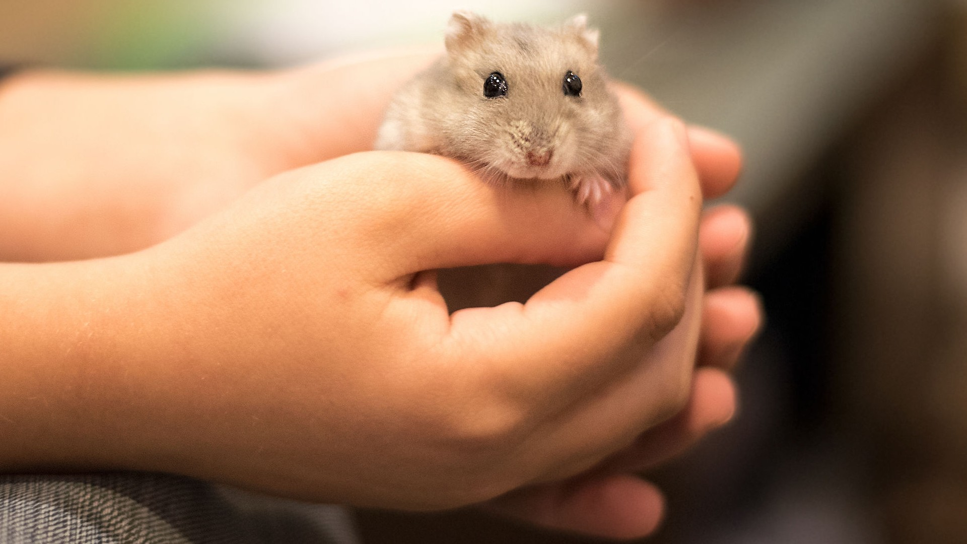 Hamsters Make A Terrible Choice As Your Kid S Pet Here S Why