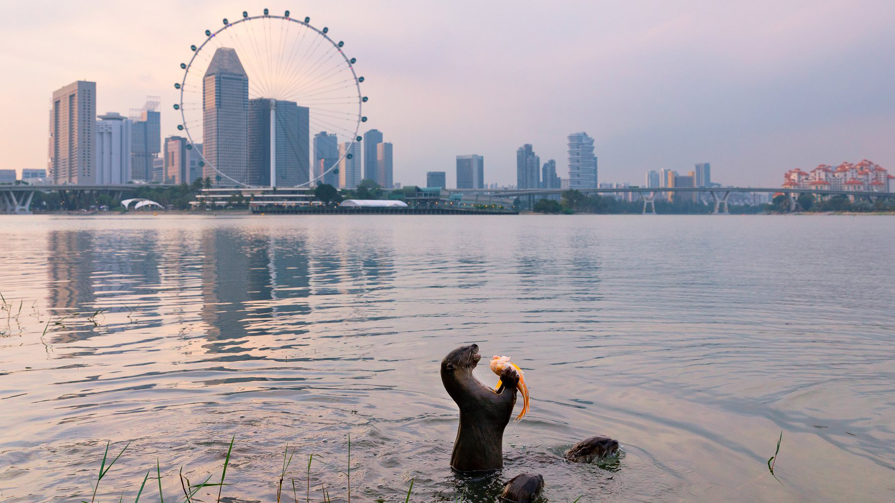 9 Places In Singapore Where You Can Spot Wild Animals