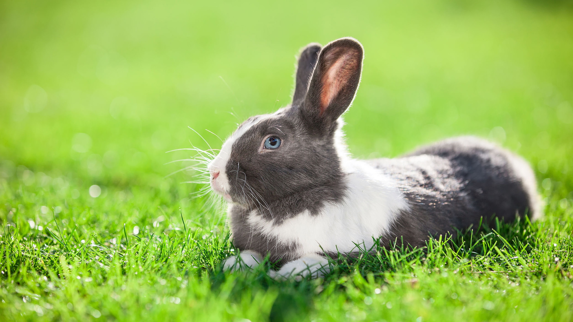 5 Of The Worst Reasons To Get A Pet Rabbit