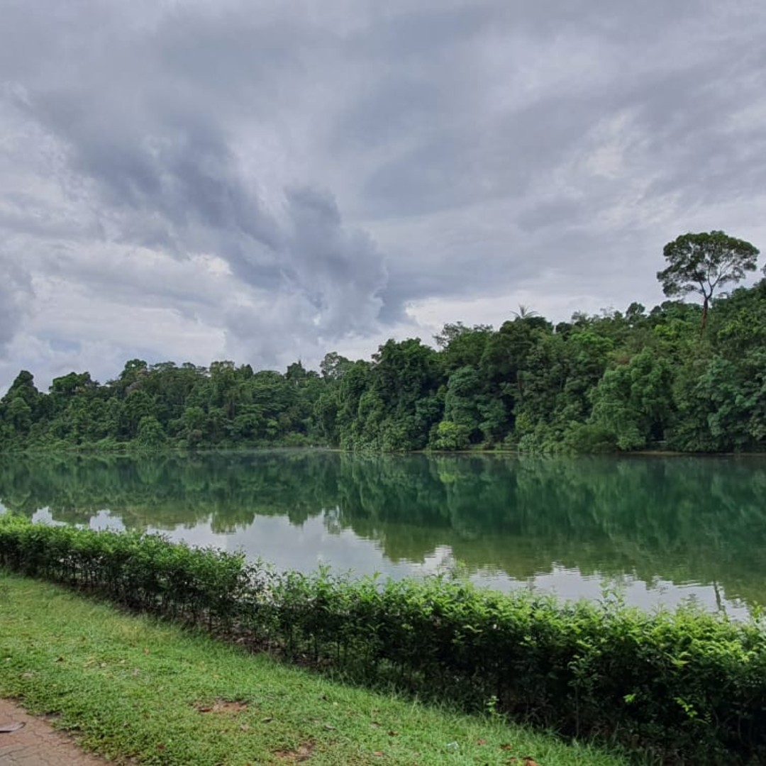 5 Things To Do In MacRitchie Other Than The TreeTop Walk