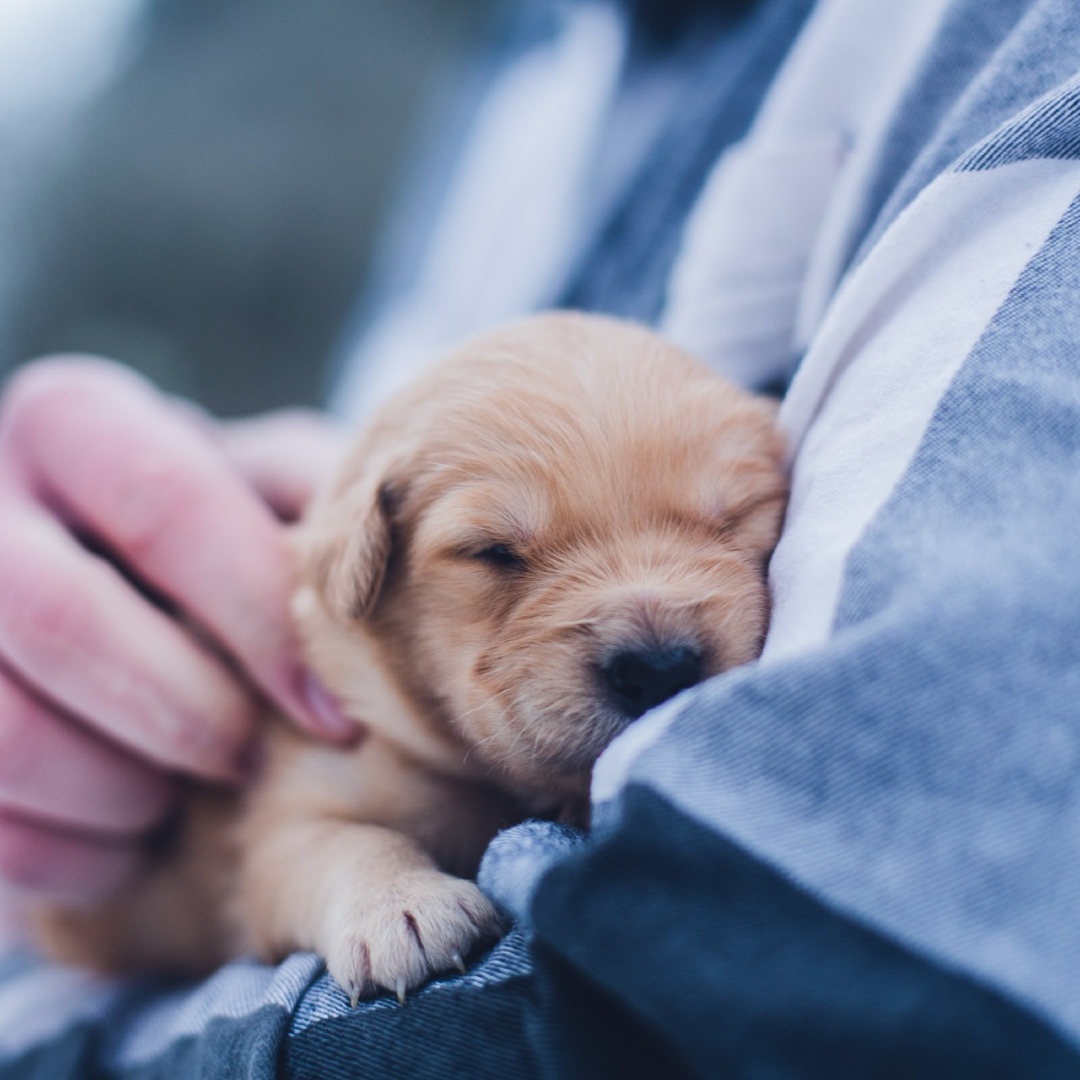 Everything You Need To Know About Raising A Puppy
