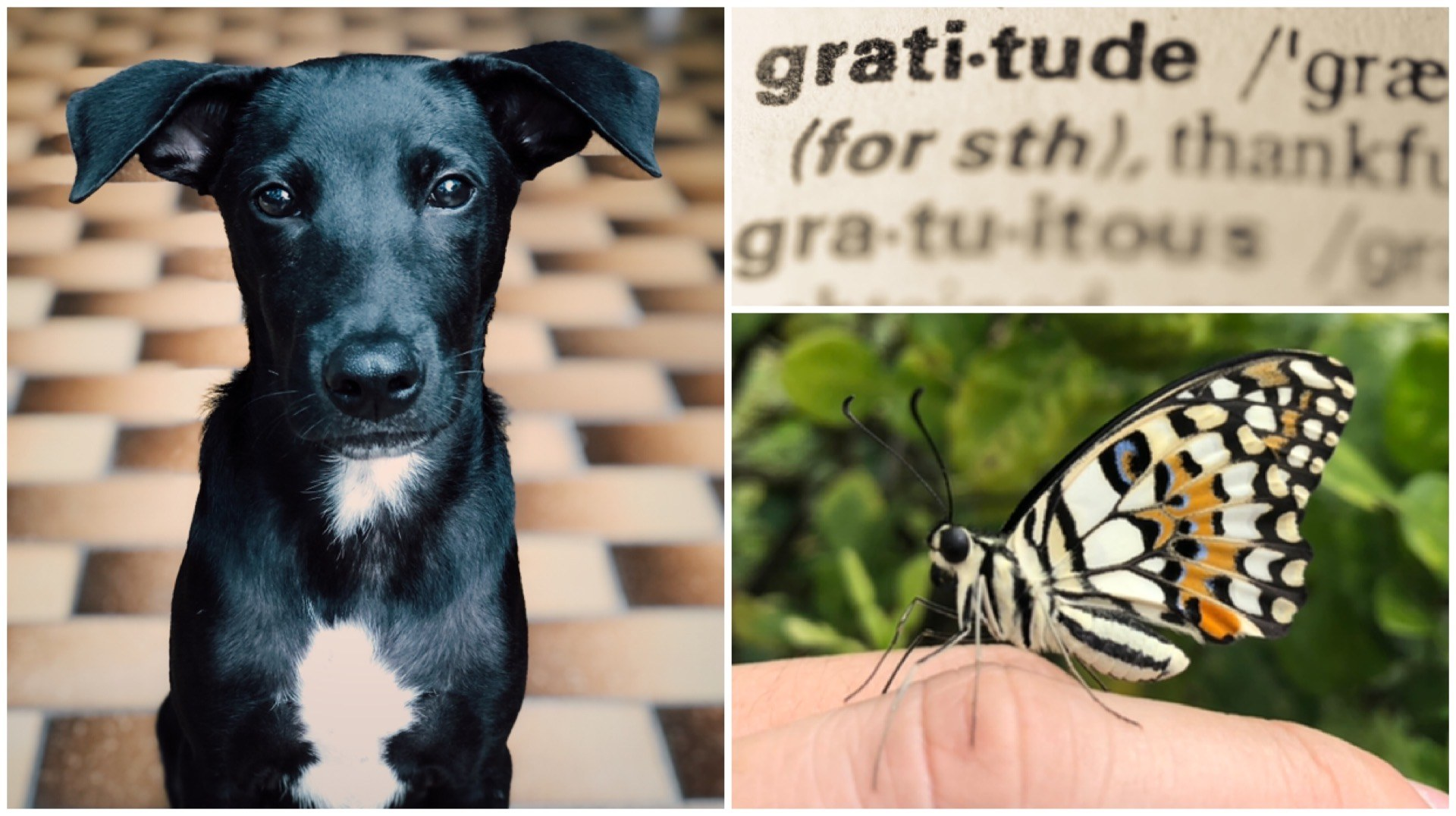 How An Attitude Of Gratitude, A Dog And A Butterfly Saw Me Through 2020