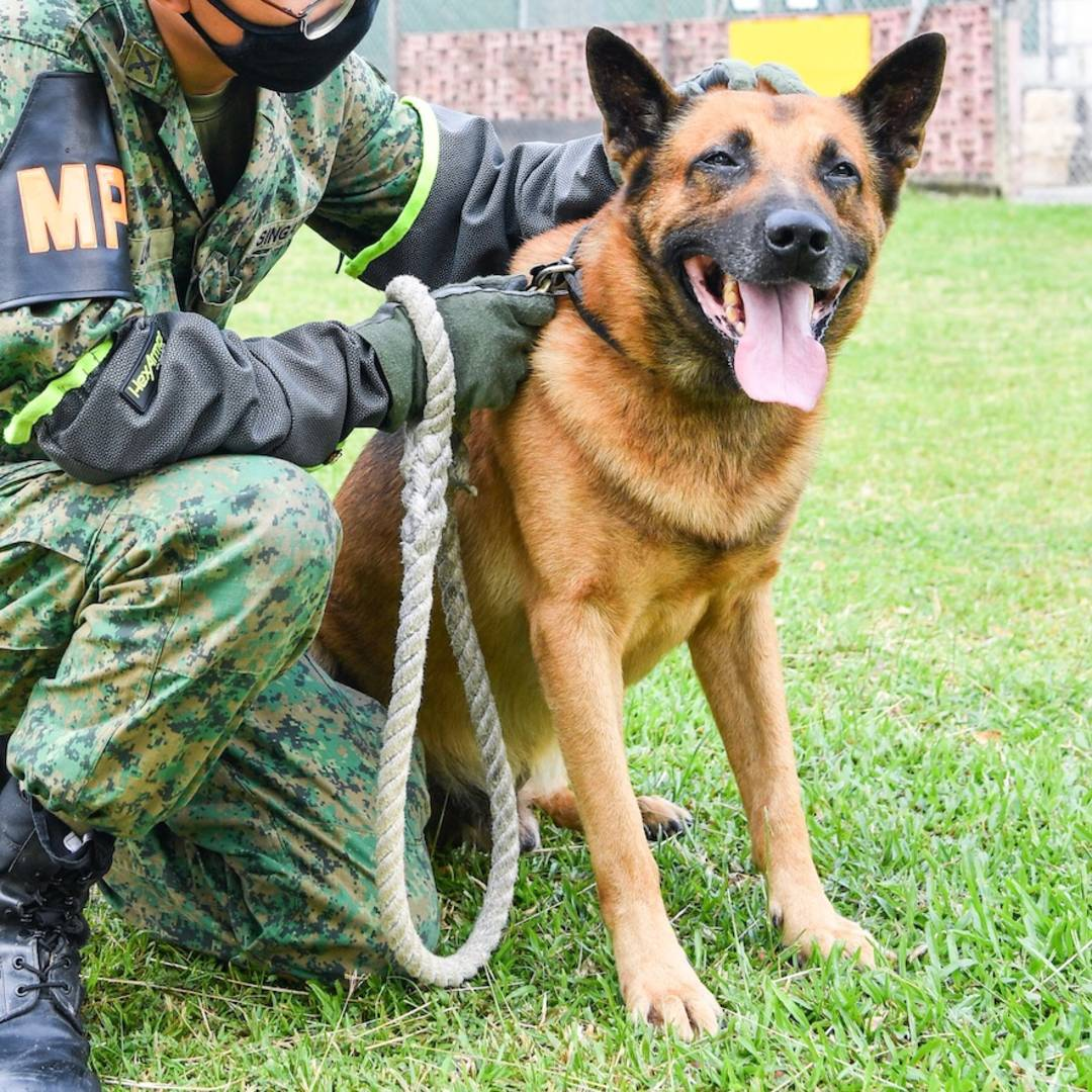 Adoption Drive Alert: From Military Vets To Family Pets
