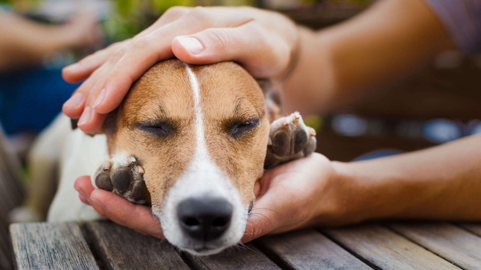 Positive Reinforcement: Why It's Good For Your Dog