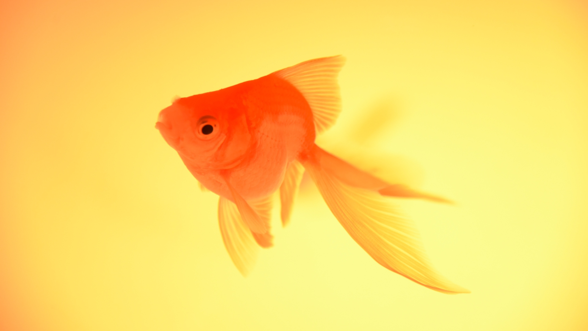 Caring For Fish 101: How To Keep Fish Successfully