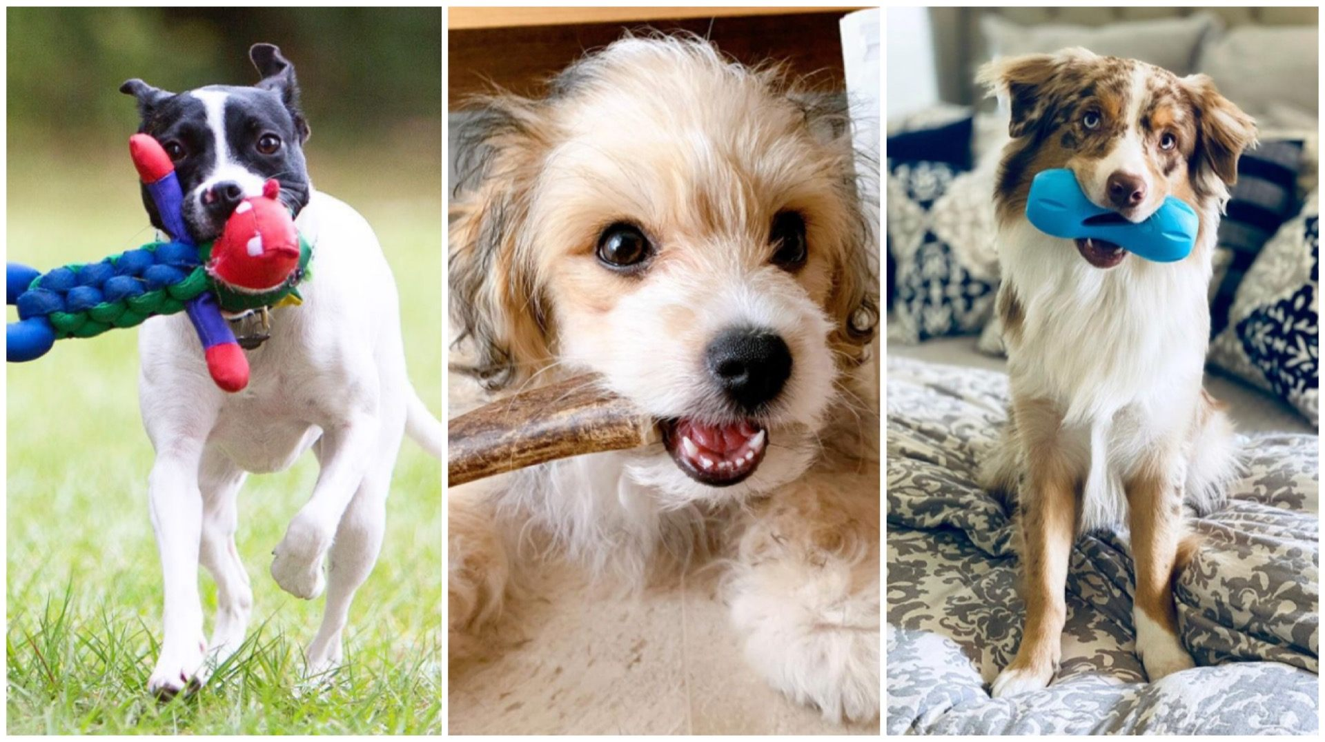 Bite-tastic! Best Chew Toys For Your Teething Puppies