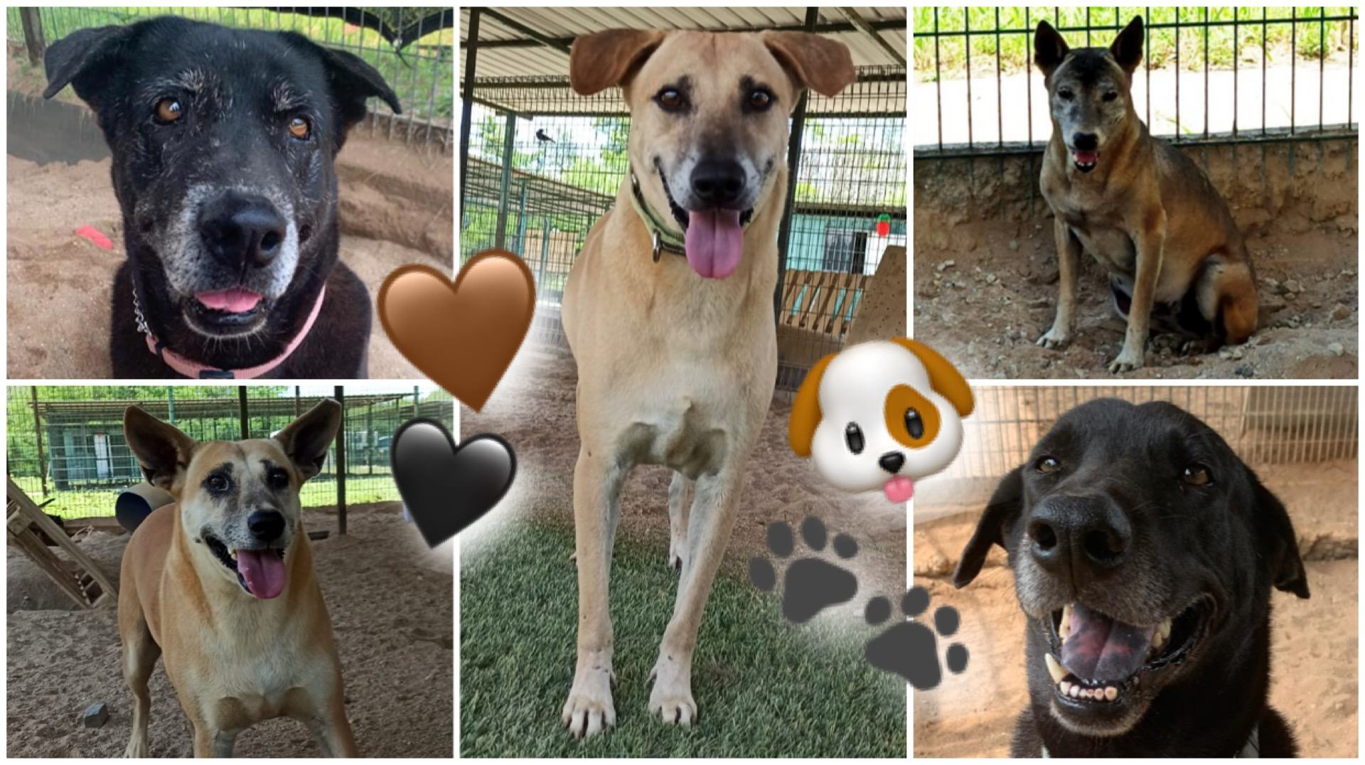 (Clockwise from top left): Could Beauty, Dragon, Lily, Handsome or Ginger be your Forever Furkid?